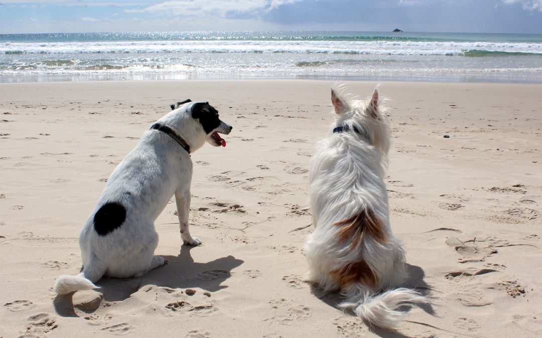 Spring and Summer content ideas for pet businesses