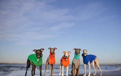 Dog Photographer Kerry Jordan's National Dog Photography Day goes viral