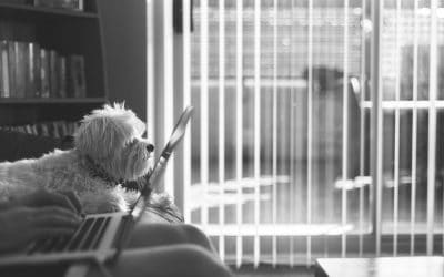 Five easy ways to collaborate on your pet business blog