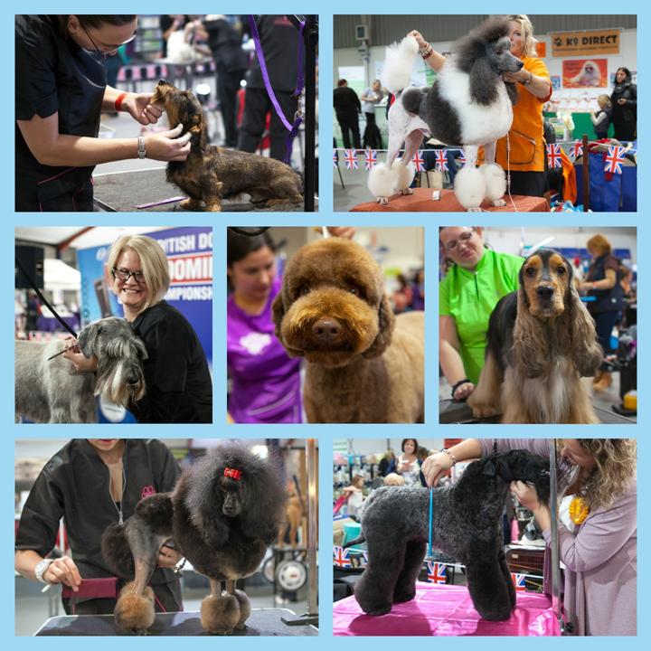 British Dog Grooming Championships highlights