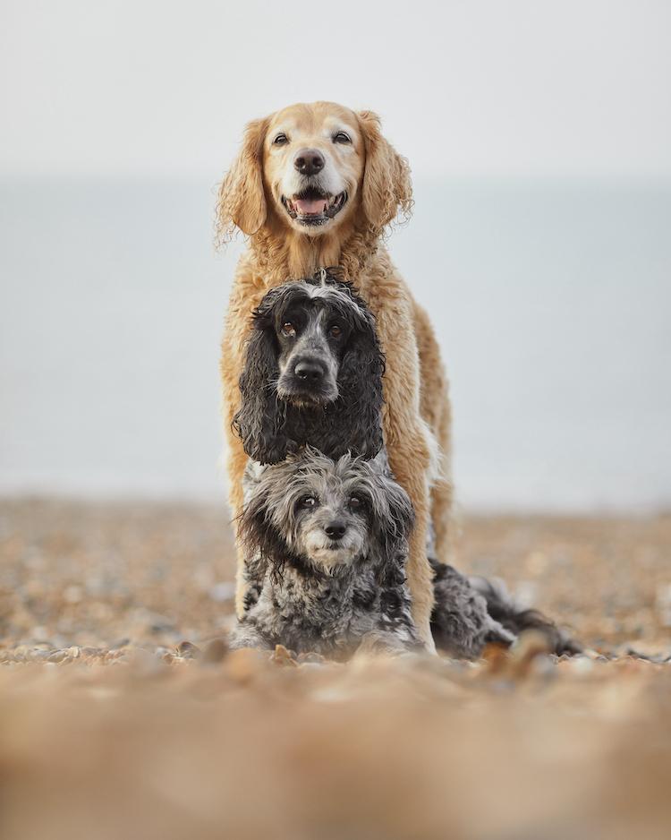 Dogs posing in totem pole by Liz Gregg
